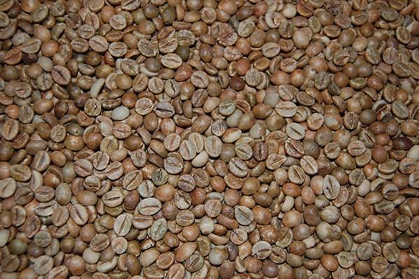 robusta Cherry India